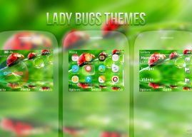 Lady Bugs theme for Nokia s40 320×240 eg: C3-00 X2-01